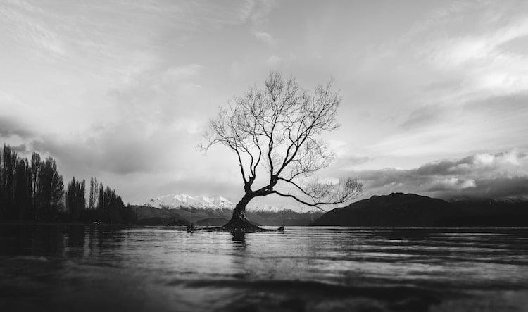 photo noir et blanc arbre dans un lac