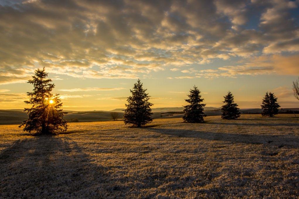 coucher de soleil avec sapins