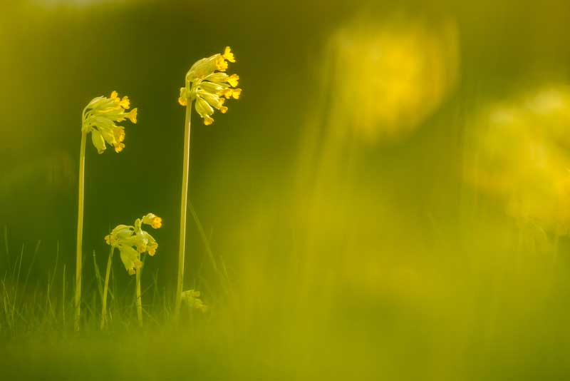 cadre-naturel-fleurs