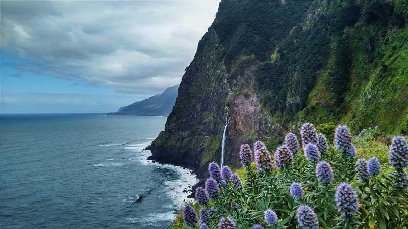 fleurs-premier-plan-littoral