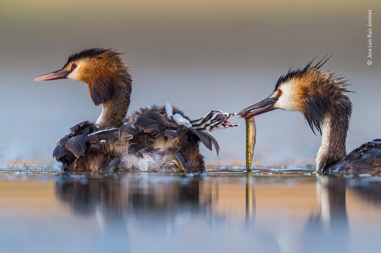 ©-Jose-Luis-Ruiz-Jiménez-Wildlife-Photographer-of-the-Year-2020